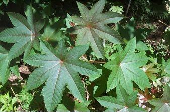 Plantes mdicinales liste - Liste des plantes medicinales ...